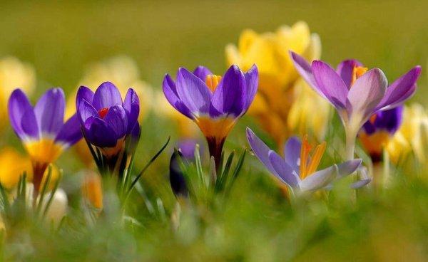 Bonjour et bon dimanche à vous toutes. En Limousin grand soleil il va faire enfin une belle journée de printemps. Bises et amitiés.