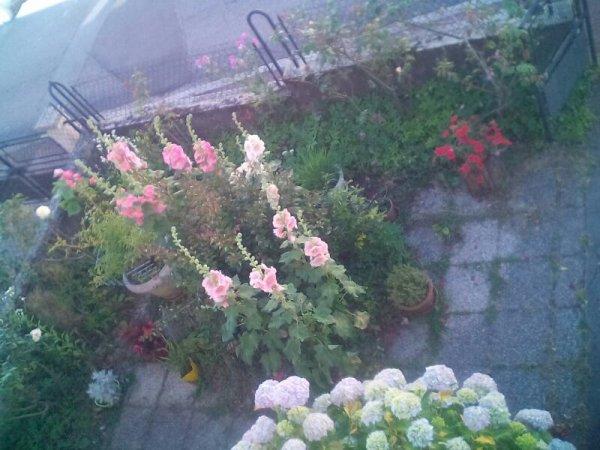 Voici mon petit jardinet devant ma maison. Bonne soirée et bisous