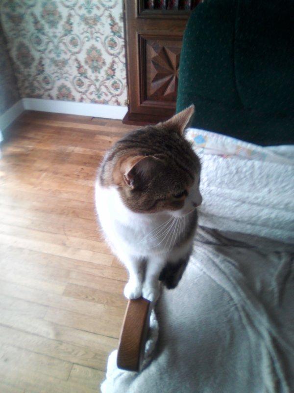 Bonjour à vous toutes j'ai eu un petit accident de la vie mon chat m'ayant griffée INVOLONTAIREMENT ce qui a généré opération avec anesthésie et hospitalisation et suivi