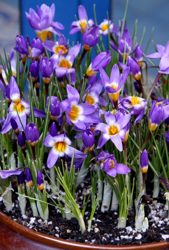 Bonjour à vous toutes je vous souhaite un agréable dimanche de Printemps comme cela est le cas en Limousin .