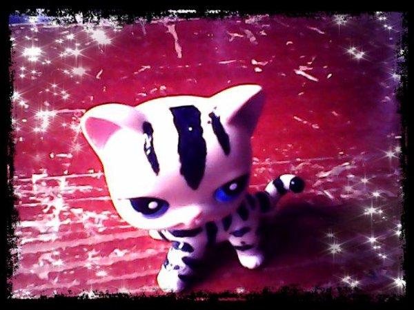 petshop tigre