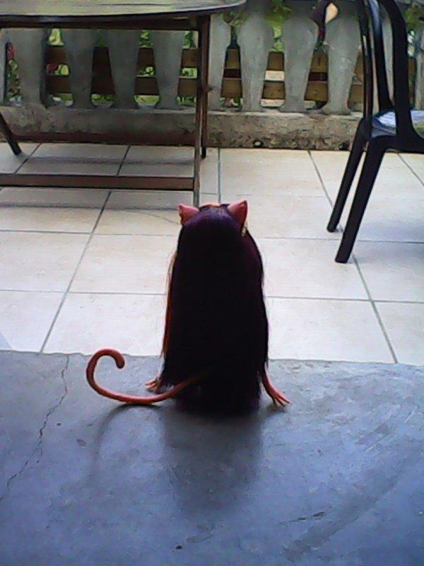 Cleolei veut partir de la maison pour aller dehors^^