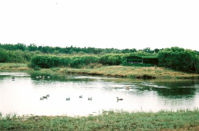 tonne ou j'ai chassé en 2006 au plaine du teich