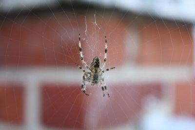 photo 2 Spider