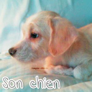 Ses Chiens