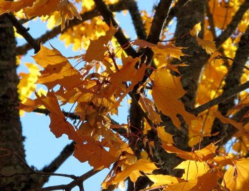 A l'automne des saisons, ce sont les feuilles qui meurent. A l'automne de la vie, ce sont nos souvenirs.