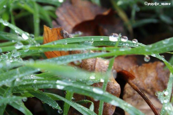 La nature en mode micro