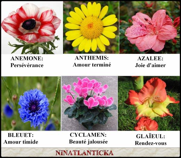 Le langage des fleurs les couleurs des roses jeudi 27 for Langage des fleurs