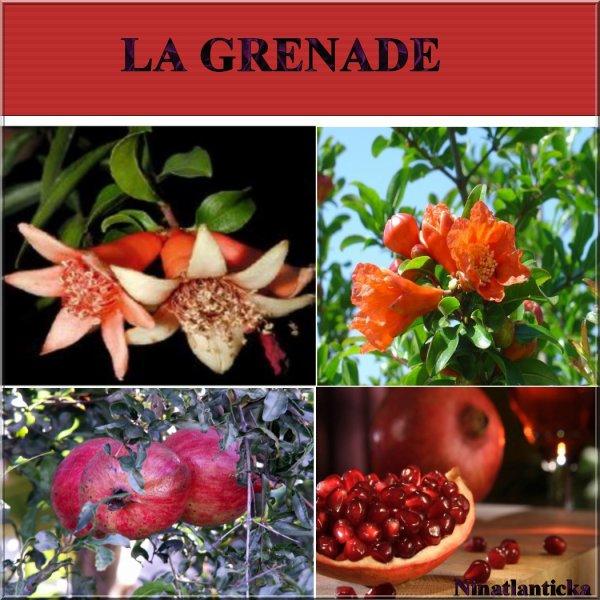 Les bienfaits de la grenade ninatlanticka - Le fruit la grenade ...