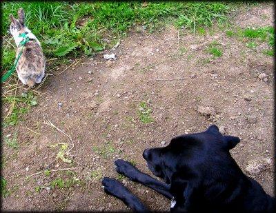 Ma chienne et Loupie