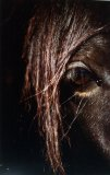Photo de In-the-gaze-of-the-horse
