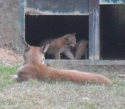 Parc animalier de Casteil ( Argeles )