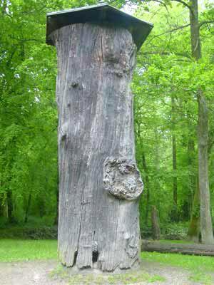 A Visiter en Alsace le Gros Chêne de Haguenau