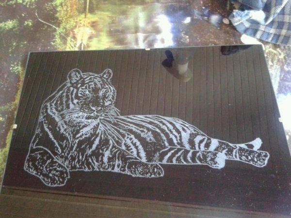 *tigre coucher