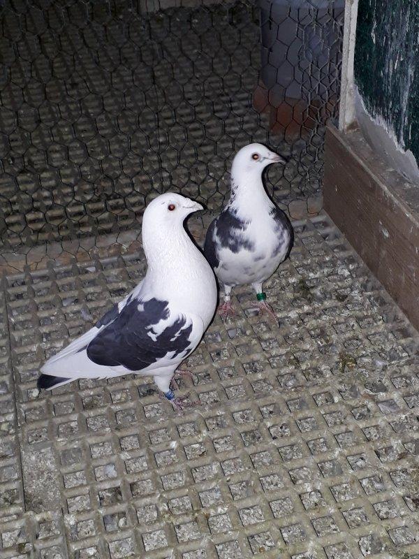 Couple senicourt