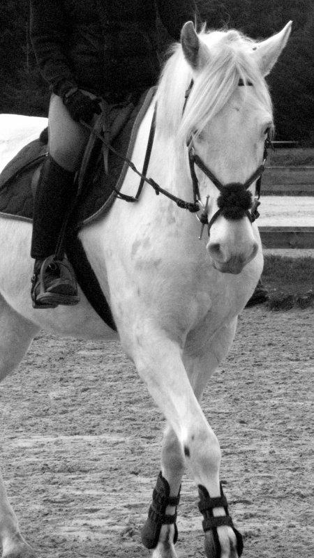 Le cheval à c'est Allure de beauté <3