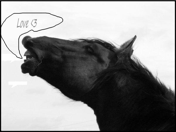 Il y a toujours une recherche d'amour dans ce que peut exprimé un cheval lorsqu'on le regarde qu'on l'admire qu'on l'observe qu'on l'apprend meme dans le regard de ceux qui paraissent dure et méchant.ceux-là sont souvent le reflet de ce que certain hommes peuvent leur faire subir <3