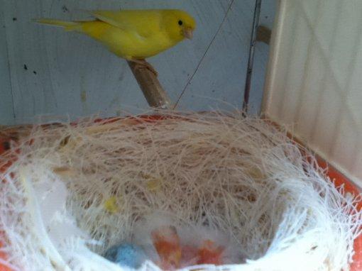 jeune lipo jaune