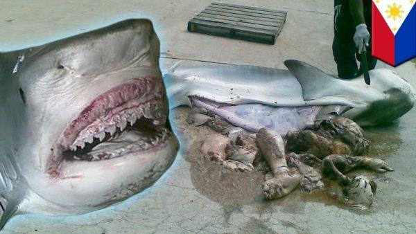 Stray Cat Injured Leg Australia