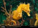 Photo de jouhari-corail