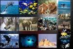 A travers le monde animal