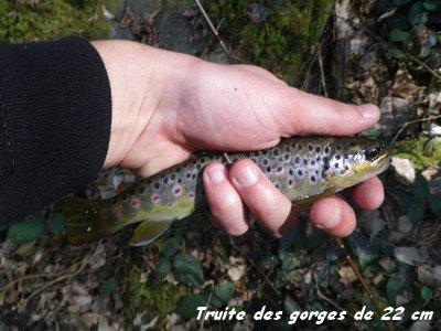 Dimanche 1er Avril 2012 : poissons d'avril