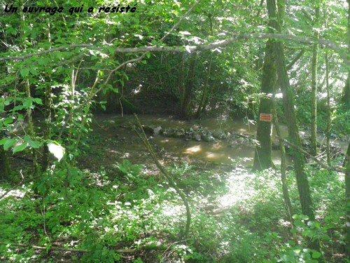 Vendredi 8 Juin 2012 : rivière en crue...