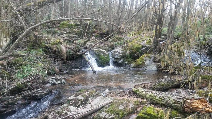 Lundi 28 Mars 2016 – Le ruisseau, un milieu envoûtant !