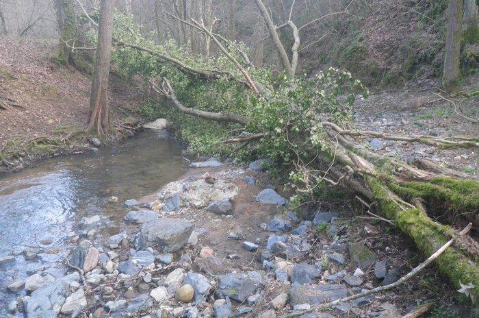 Dimanche 12 mars 2017 : Ouverture en ruisseau