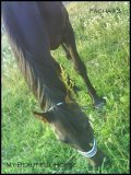 Photo de My-Beautiful-Horse