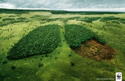 La deforestation