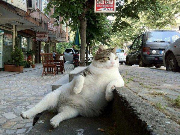 le chat qui a pris sa retraite a la brasserie denface