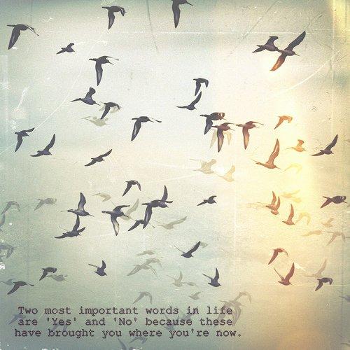 • Je m'appelle Katniss Everdeen. Pourquoi je ne suis pas morte? Je devrais être morte. Ce serait meilleur pour tout le monde si j'étais morte. - Katniss Everdeen • HUNGER GAME