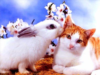 N'abandonnez pas vos animaux ... Adoptez en un ...