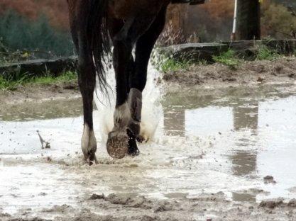 """Horses ..Kik""""."""