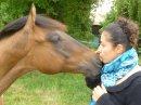 Photo de Equus-caballus-spirit