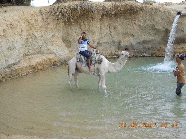 avec l chameau au casscade