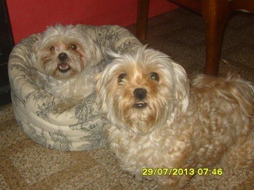 Chaneli et Pimky