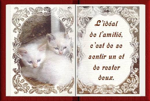 Lamitie Bienvenue Sur Le Blog De Choupinette 4040