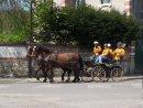 Photo de chevaux22008