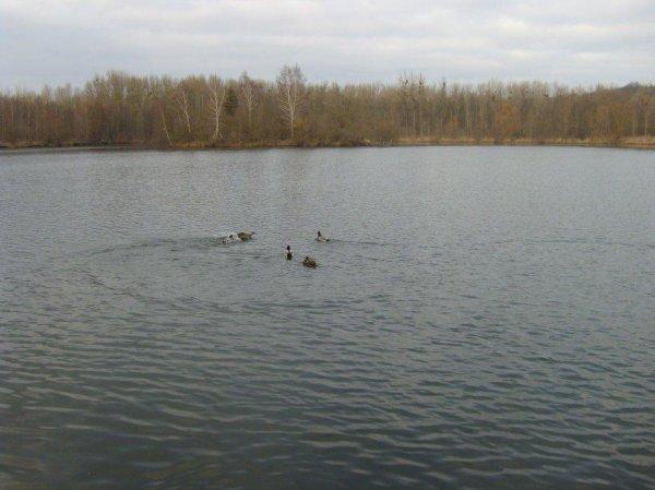 Nouveau plan d'eau pour 2012
