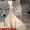 RenardLove