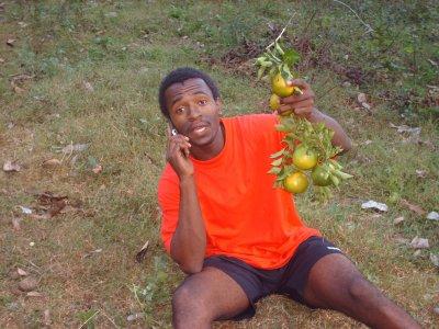 mayana fruits