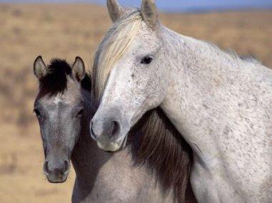 Poème : les chevaux