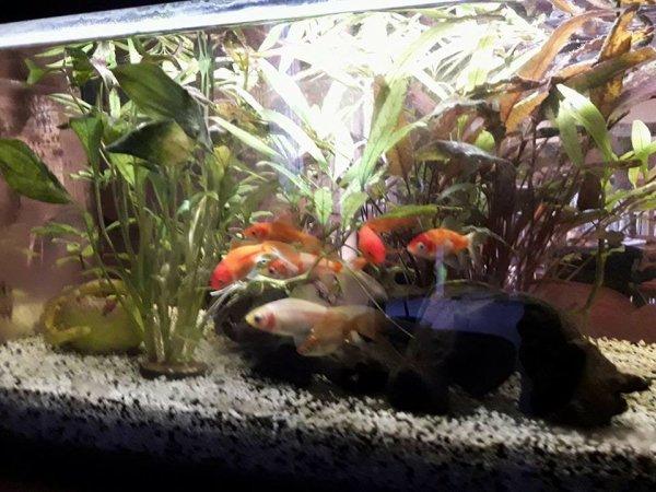 Mes petits poissons surprise vont sur leurs deux ans , toujours tous les sept !