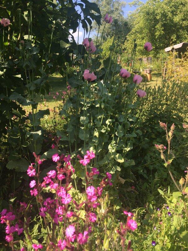 Visite du jardin ! chaud !  chaud ....