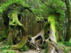 Quel est le plus vieil arbre du monde ?