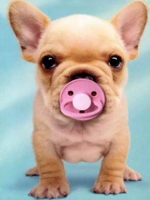 Le monde fascinant des chiens - Image bebe chien ...
