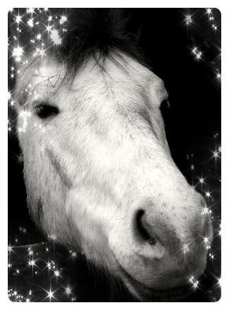 mon poney shérie (l)