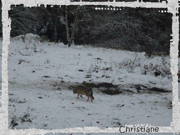 Parc aux loups